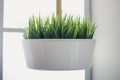 Das grüne Gras wird in einem weißen Topf verschoben stockfoto