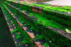 Das grüne Moos, grüne Flechte lizenzfreie stockbilder