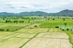 Das grüne Reisfeld im Sommer bei Kanchanaburi, Thailand Lizenzfreie Stockbilder