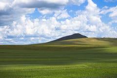 Das grüne seidige Feld und der blaue bewölkte Himmel Stockfotos