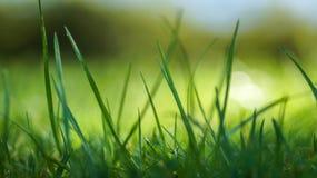 Das Gras Stockbilder