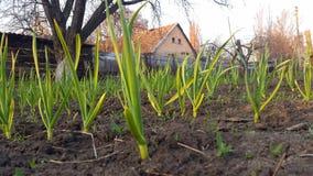 das Gras auf dem Hintergrund des ländlichen Hauses Stockbilder