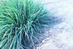 Das Gras, das in einem Garten im Freien wächst Stockfoto