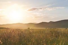 Das Gras der Goldfarbe wird mit der Sonne beleuchtet Lizenzfreie Stockbilder