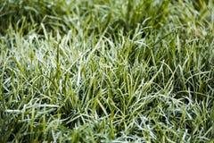 Das Gras im Tau stockbilder