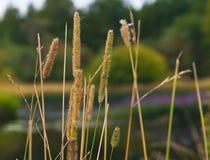 Das Gras im Wald Lizenzfreies Stockfoto