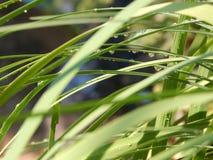 Das Gras ist in den Tröpfchen des Regens Stockfotos