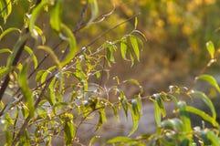 Das Gras mit Sonnenstrahl Stockfotos