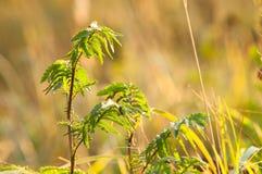 Das Gras mit Sonnenstrahl Lizenzfreies Stockfoto