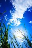 Das Gras und der blaue Himmel und die Sonne Stockfotos