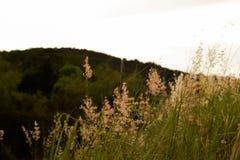 Das Gras wird durch den Wind durchgebrannt lizenzfreie stockbilder