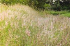 Das Gras wird durch den Wind durchgebrannt stockfoto