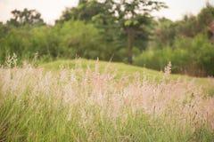 Das Gras wird durch den Wind durchgebrannt stockfotos