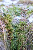 Das Gras wird eingefroren. Lizenzfreie Stockbilder