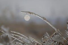 Das Gras wird mit Eis nach dem eisigen Regen vor dem hintergrund der Sonne bedeckt Abstraktion Makro für Design Stockbild
