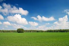 Das Grasfeld Lizenzfreies Stockbild