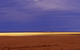 Das Grasland Stockfoto