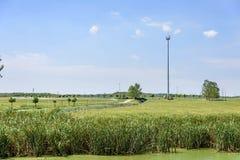 Das Grasland und das Schilf Lizenzfreie Stockfotos
