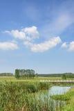 Das Grasland und die Brücke Stockfotografie