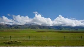 Das Grasland unter dem Schneeberg lizenzfreies stockfoto