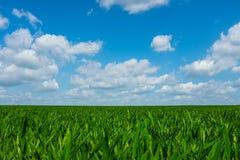Das Grasleben ist schön stockfotografie