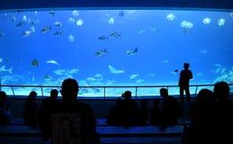 Das großartige Aquarium bei Marine Museum Stockbilder