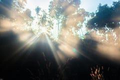 Das großartige natürliche Licht Stockfotografie