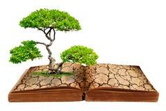 Das große Baumwachstum von einem Buch Stockbild