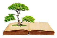 Das große Baumwachstum von einem Buch Stockfoto
