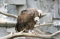 Das große Bild eines Vogels des Familienfalken Lizenzfreie Stockfotos