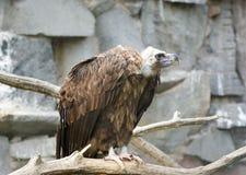 Das große Bild eines Vogels des Familienfalken Lizenzfreies Stockbild