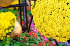 Das große Blumenbeet mit gelben Blumen Stockfotos