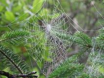 Das große Netz der Spinne stockfotografie