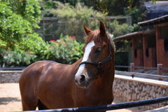 Das hübsche Pferd lizenzfreie stockfotografie