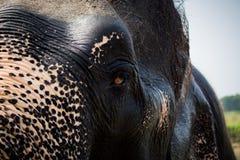Das halbe Gesicht des Elefanten Lizenzfreie Stockfotografie