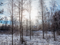 Das Haus in einem Winterholz Stockfoto
