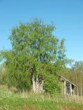 Das Haus unter einem Baum Lizenzfreies Stockfoto