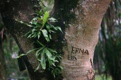 Das heftige Verlangen auf dem Baum Stockfotos
