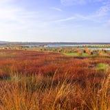 Das Heidemoor im Herbst Stockfotos