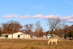 Das hellfarbige Pferd ist in der Wiese allein stockfoto