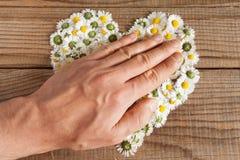 Das Herz, das von den Gänseblümchen gemacht wird, blüht im hölzernen Hintergrund Stockfotografie