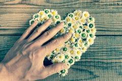 Das Herz, das von den Gänseblümchen gemacht wird, blüht im hölzernen Hintergrund Lizenzfreies Stockfoto