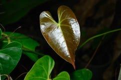 Das Herz in der Natur Stockfotografie
