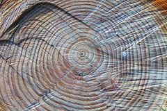 Das Herz des Holzes stockfotografie