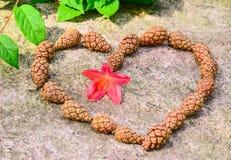 Das Herz des pinecone Stockfotografie