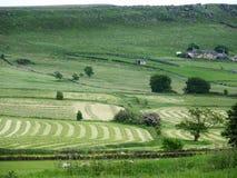 Das Heu, das Feldcheshire-Schwarzes macht, schaukelt Bauernhof Stockbild
