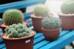 Das Hobby, das mit vielen des Sprösslingskaktus im Kindertagesstättengarten für Verkauf im Garten arbeitet, verdienen Geld Lizenzfreies Stockbild