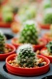 Das Hobby, das mit vielen des Sprösslingskaktus im Kindertagesstättengarten für Verkauf im Garten arbeitet, verdienen Geld Stockfotos
