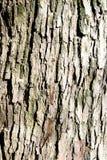 Das Holz Lizenzfreies Stockbild