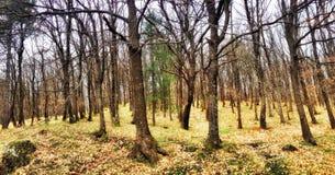 Das Holz des Herbstes Lizenzfreie Stockfotos